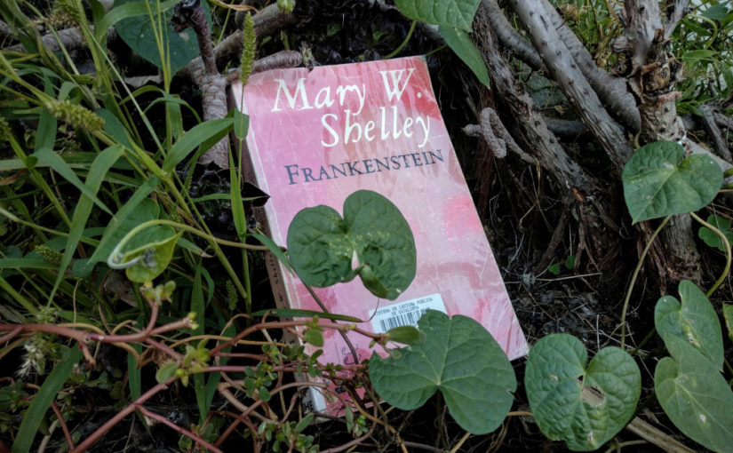 Frankenstein, de Mary W. Shelley